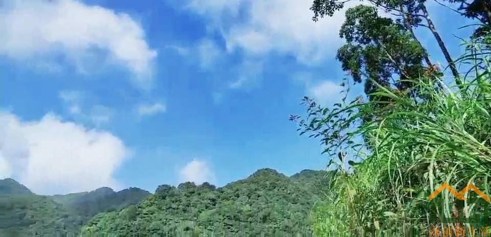 丰顺县洋西坑高山茶园风光