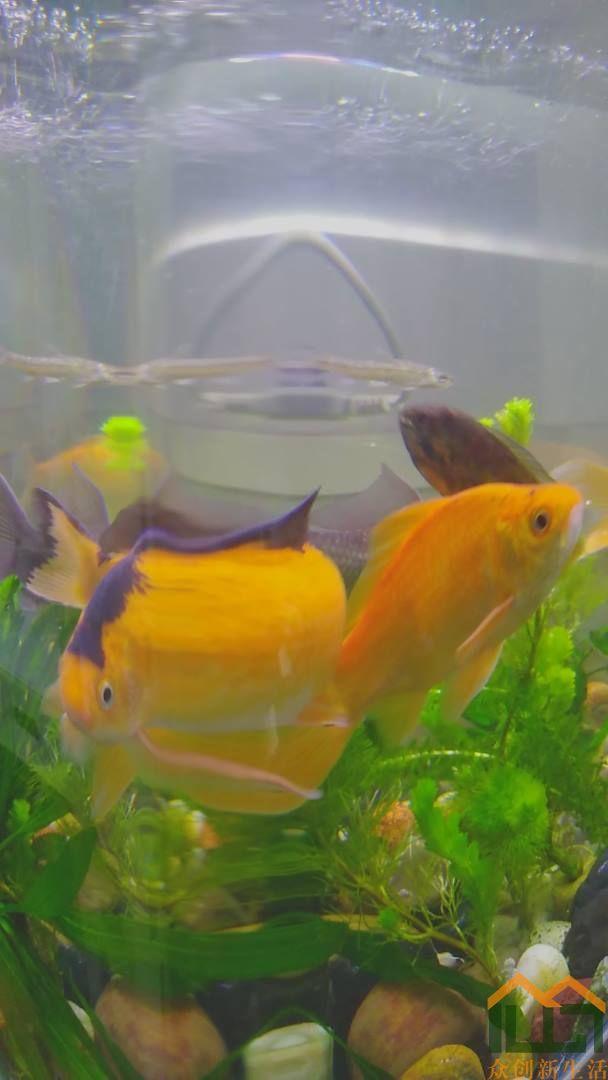 生活拾趣:鱼水之乐