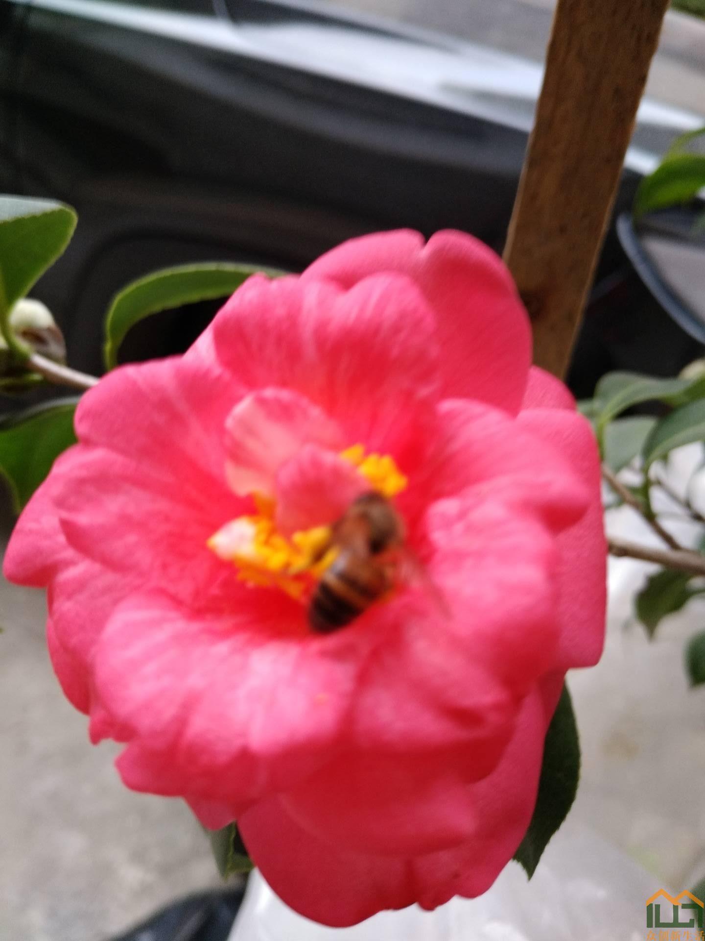 花开蜂自来